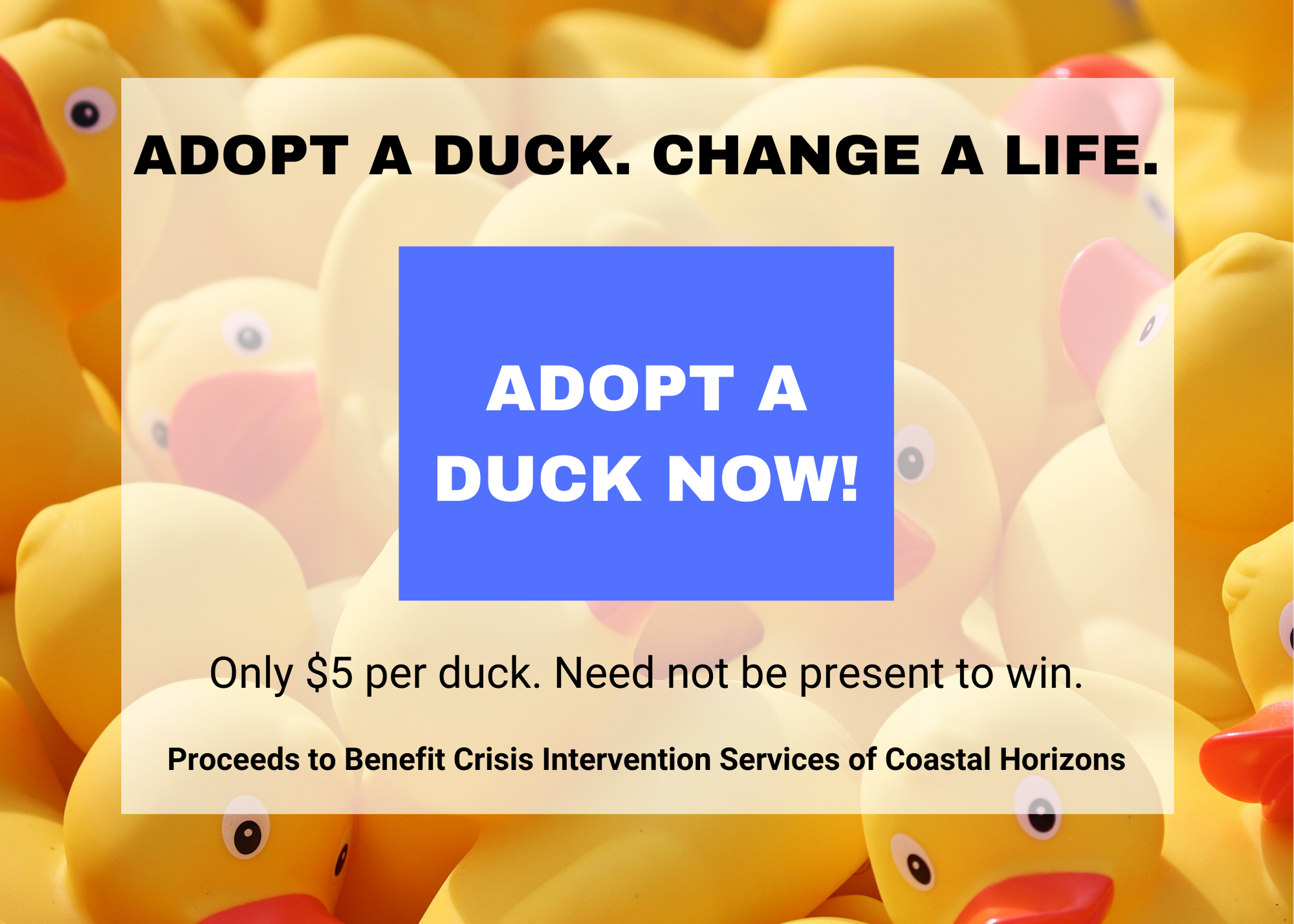 Adopt now graphic